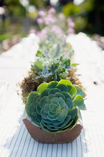 Décoration mariage : thème «Les Succulentes»