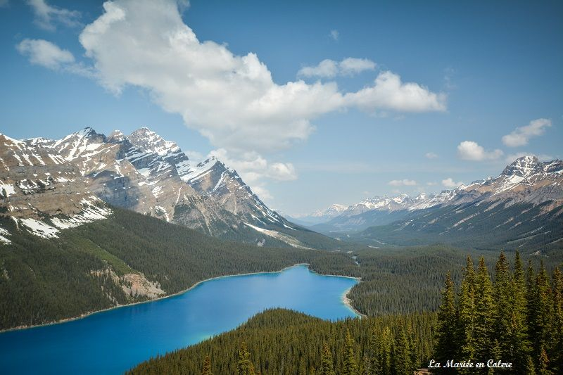 Lac Peyto Jasper National Park