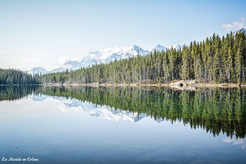 vue Jasper National Park