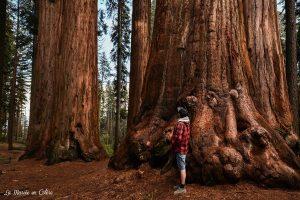 sequoia park californie